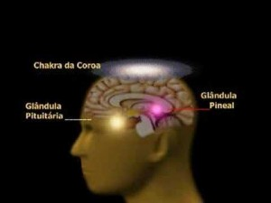 Pineal1